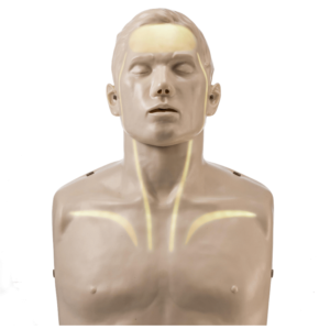 Brayden LIGHTS Manikin with WHITE LED lighting